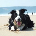 Our favourite dog-friendly beaches